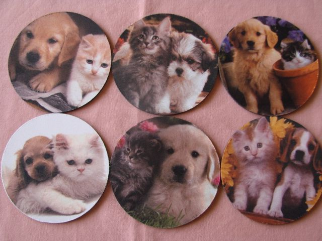 Coasters we printed for Kitty and Puppy Haven