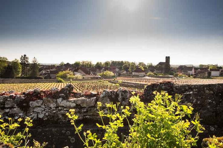Pommard, Burgundy