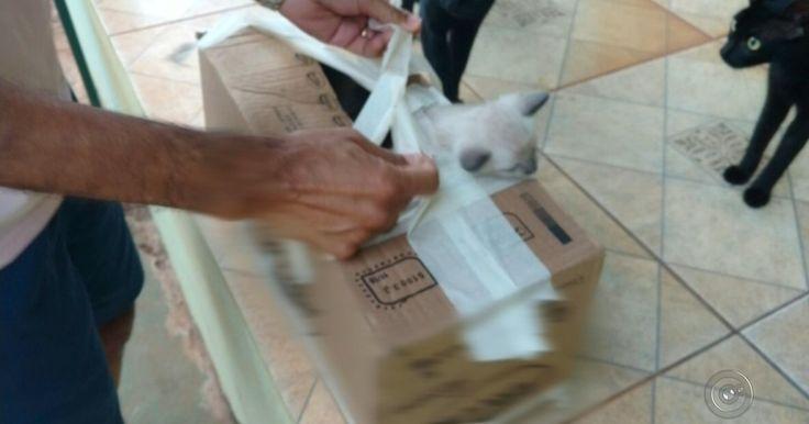Filhotes de gatos são abandonados dentro de caixa em Araçatuba