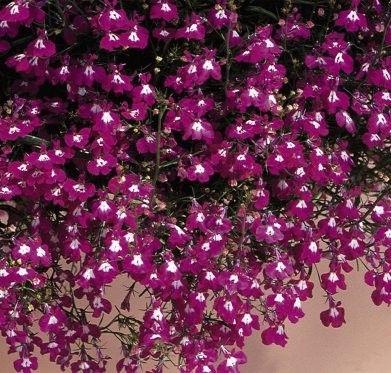 Fleurs annuelles ombre - Jardiniere mi ombre mi soleil ...