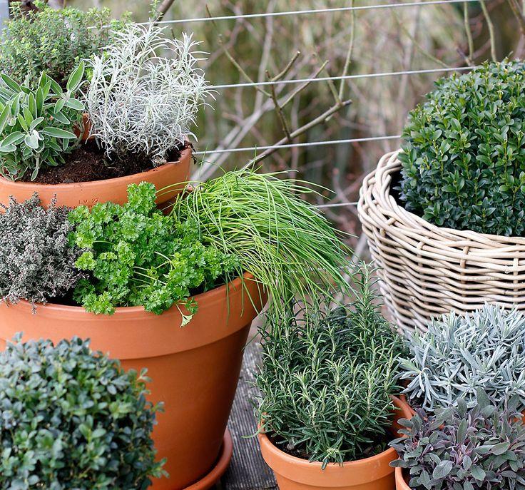 Pyramide d'herbes, pots à suspendre, treillis ou pots empilés: même sur un balcon, on peut planter un joli jardin d'herbes aromatiques.