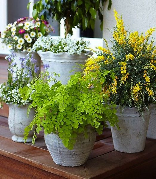 Keep bugs away this summer: In place of spray and pesticides, try a cluster of mosquito-repelling potted plants!