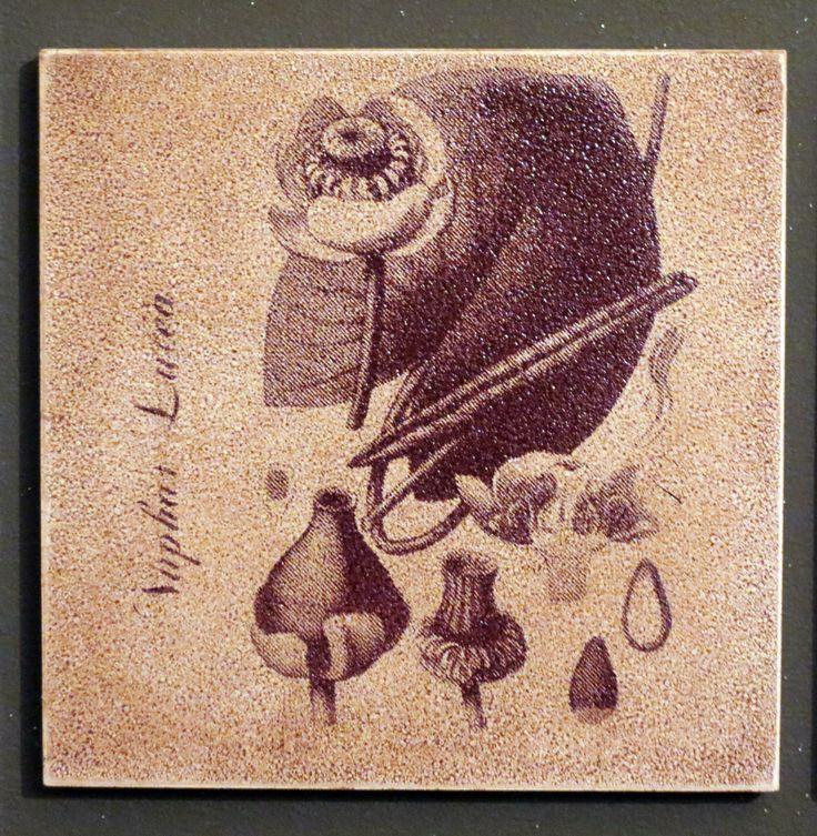 Del herbario, serigrafía cerámica. Cristina del Castillo