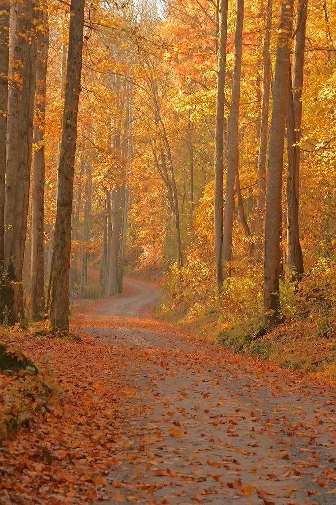 MUSTS — musts: Morning Colors by Jim Osborn Great Smoky...