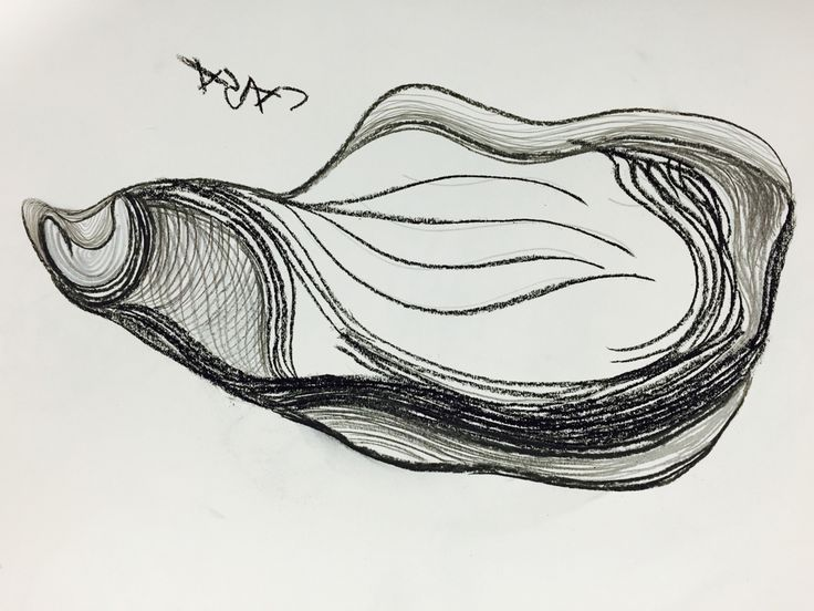 Contour Line Drawing In Art : Cross contour drawing young artist