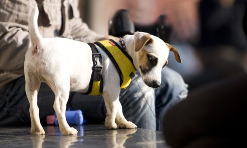 Importance of Owning an Assistance Dogs A Guide Dog is a working dog that's been highly trained to direct someone with impaired vision safely from one place to another.    #Dogs #Pets #VuCare #DogsAssistance #Dog #DogOnDuty #DogCare #ServiceDogs #DogsForDisabilities #AssistanceDogs #DogTraining #AssistanceDogProgram #trainer #dogtrainer