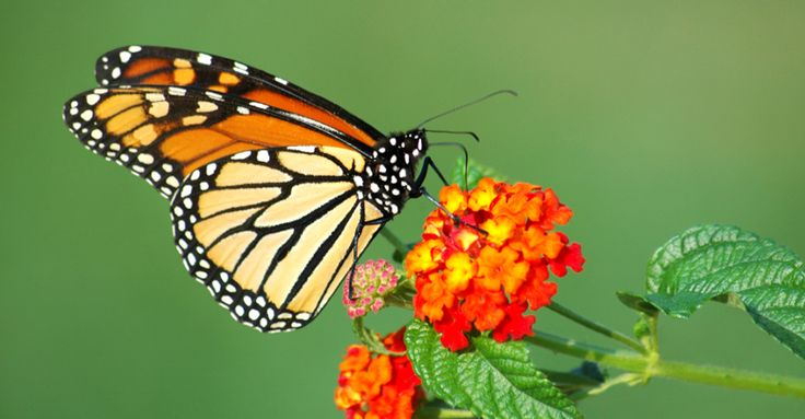 NEW TRIP! Monarch Butterfly Photography Adventure: Monarch butterfly, El Rosario Butterfly Sanctuary, Mexico