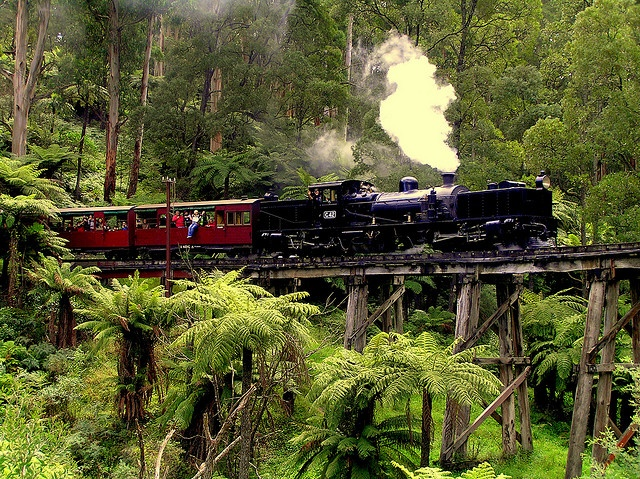 A recently restored rare narrow gauge Garratt steam engine, one of the narrow gauge locos of the Puffing Billy Railway in the Dandenong Ranges croosing the trestle bridge over Monbulk Creek at Belgrave.