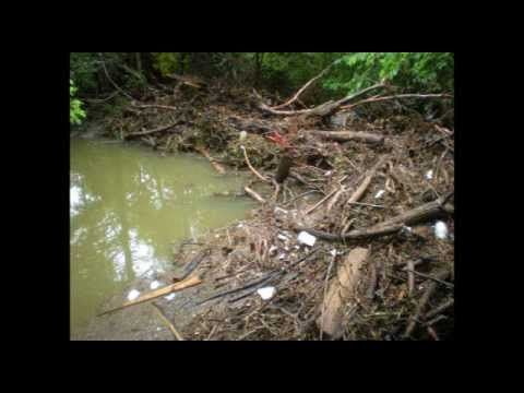 Yard Waste Management to Protect Water Quality