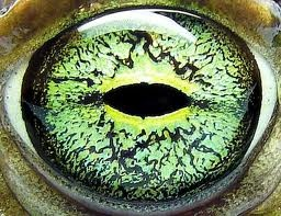 Animal eye photography | Updegraff Laser Vision
