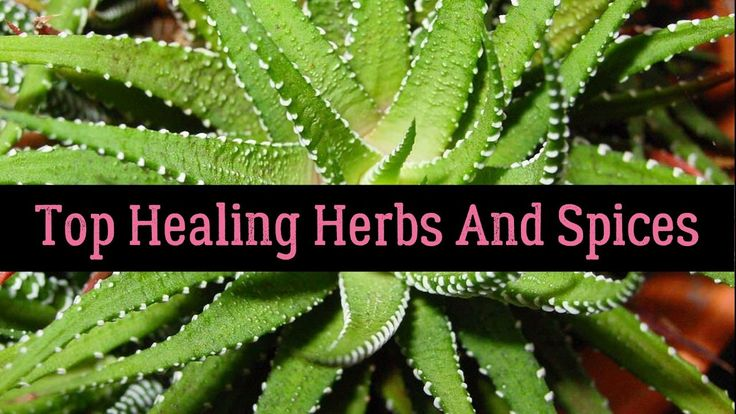 Top 11 Healing Herbs And Spices And Their Health Benefits