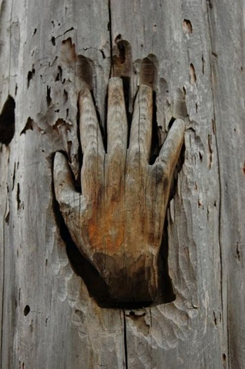 Wood carving of a hand... timelesswoodshop:   (via Pinterest)