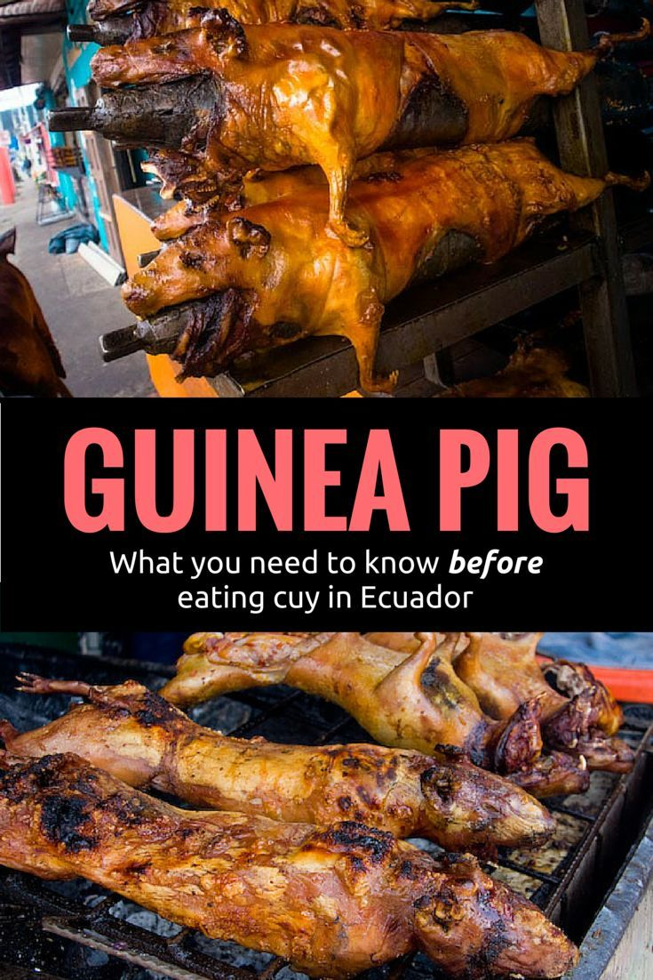 How to eat cuy Guinea Pig in Ecuador and Peru. Eating