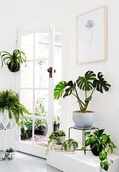 Witte urban jungle studio // Botanical Wares Studio in Victoria, Australie