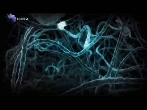 Redes para la ciencia: Las decisiones son inconscientes: El cerebro inconsciente