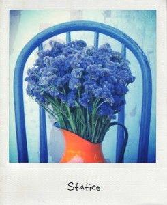 Statice: The Flower, Fleur Dété, Fleurs D Été, Fleur D Été, Fleurs Idées, Moi D Août, Flowers, Pretty Flower, Flower