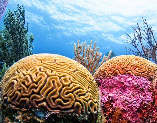 The Marine life in the Belize Barrier Reef is awe inspiring