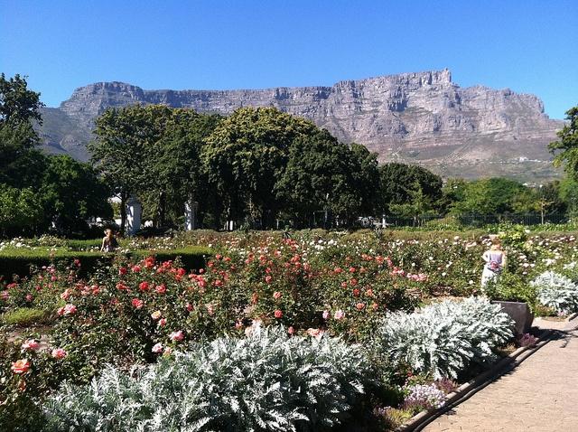 Company Gardens, Cape Town, SA
