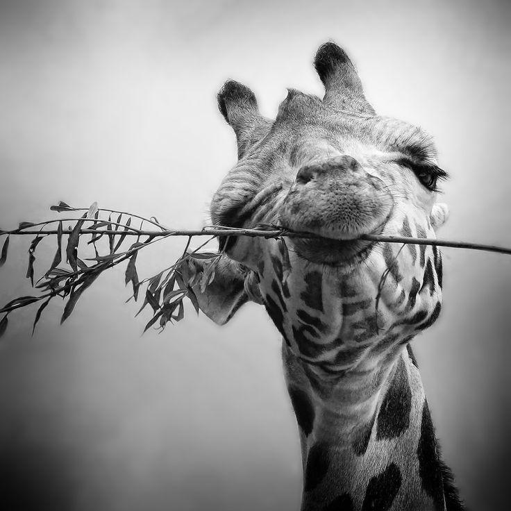 Красивые картинки, прикольные черно белые картинки животные для