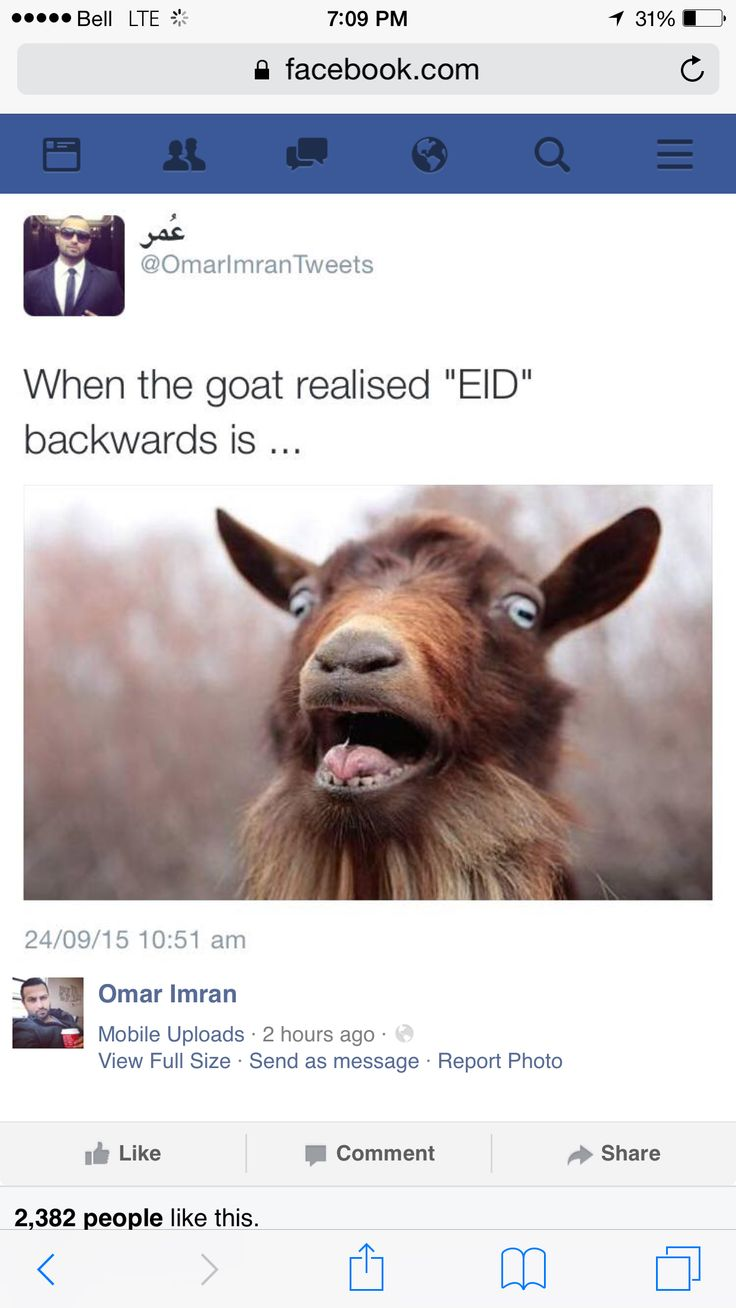 We are celebrating eid tomorrow! Which is one of two muslim religious celebrations. Eid al adha is the second holiday after eid al fitr. Eid al adha means the feast of sacrifice whether it be a goat, sheep etc. just thought this was a funny and relatable meme!