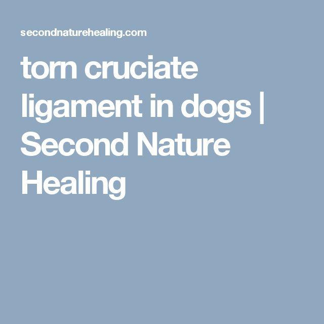 torn cruciate ligament in dogs | Second Nature Healing