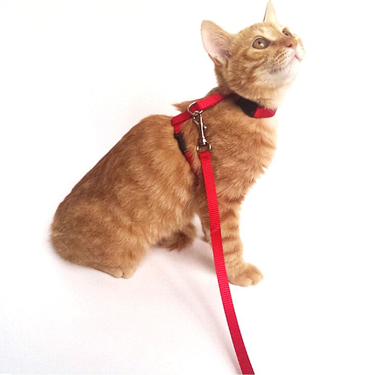 Long High Quality Nylon Cat Leash