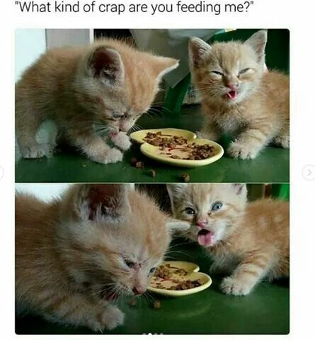 Best Crazy Cats Images On Pinterest Funny Animal Pictures - Meatball the fat cat kept eating everyones food so his owners came up with a clever solution