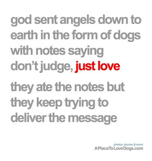god sent angels down to earth in the form of dogs: Angel, Dogs Quotes, Pet Treats, Judge, So True, Sweet Messages, Design Quotes, True Stories, Dogs Love