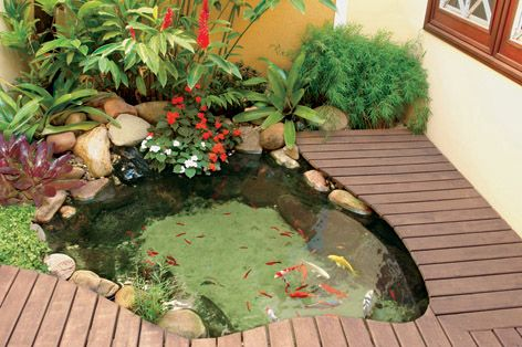 The deck gives this pond a very inviting and finished look. The deck also gives close access to hand feeding the fish!