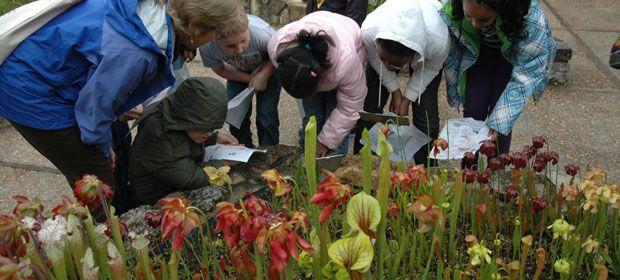 12 Best Native Nc Plants Images On Pinterest North Carolina Botanical Gardens And Chapel Hill Nc