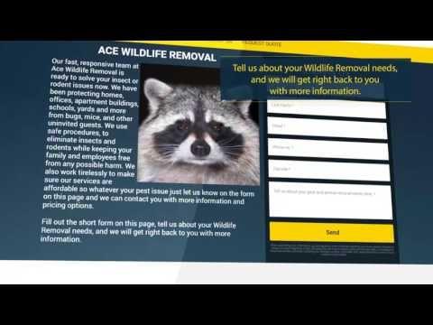 (2) Wildlife Removal Pros - YouTube
