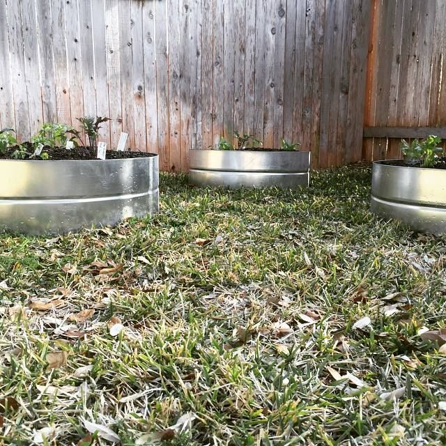 Our Veggie Pods are a great solution for small space veggie gardening. Made from rainwater collection tanks, they are not only beautiful, but durable also.