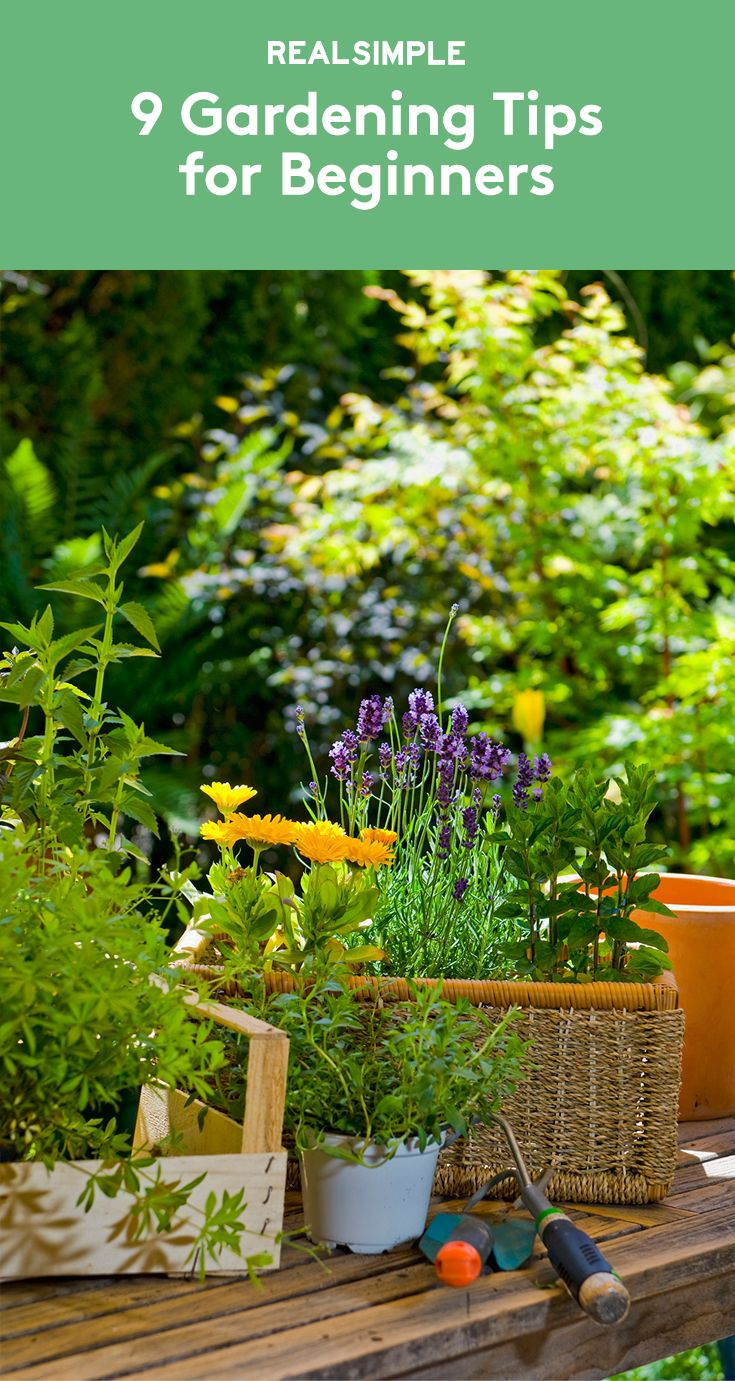 9 Gardening Tips For Beginners Need To Tips And Gardening