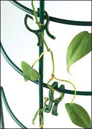 Vine Clips - Gardening