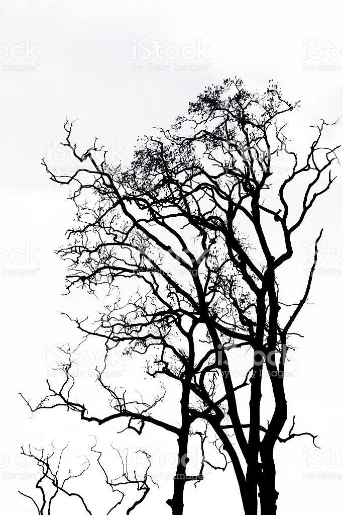 M s de 25 ideas incre bles sobre ramas de los rboles en - Ramas de arboles ...
