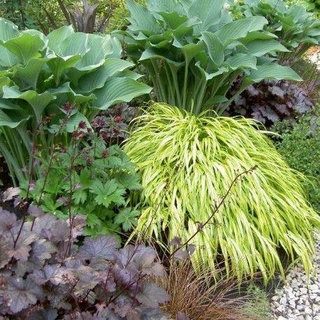 Oltre 25 fantastiche idee su piante da ombra da giardino - Piante da giardino ombra ...