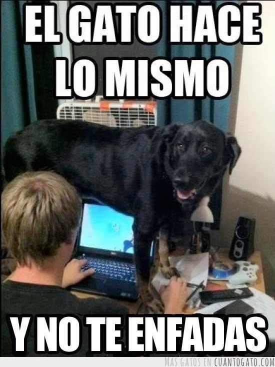 #cvamanecer www.veterinariomallorca.es