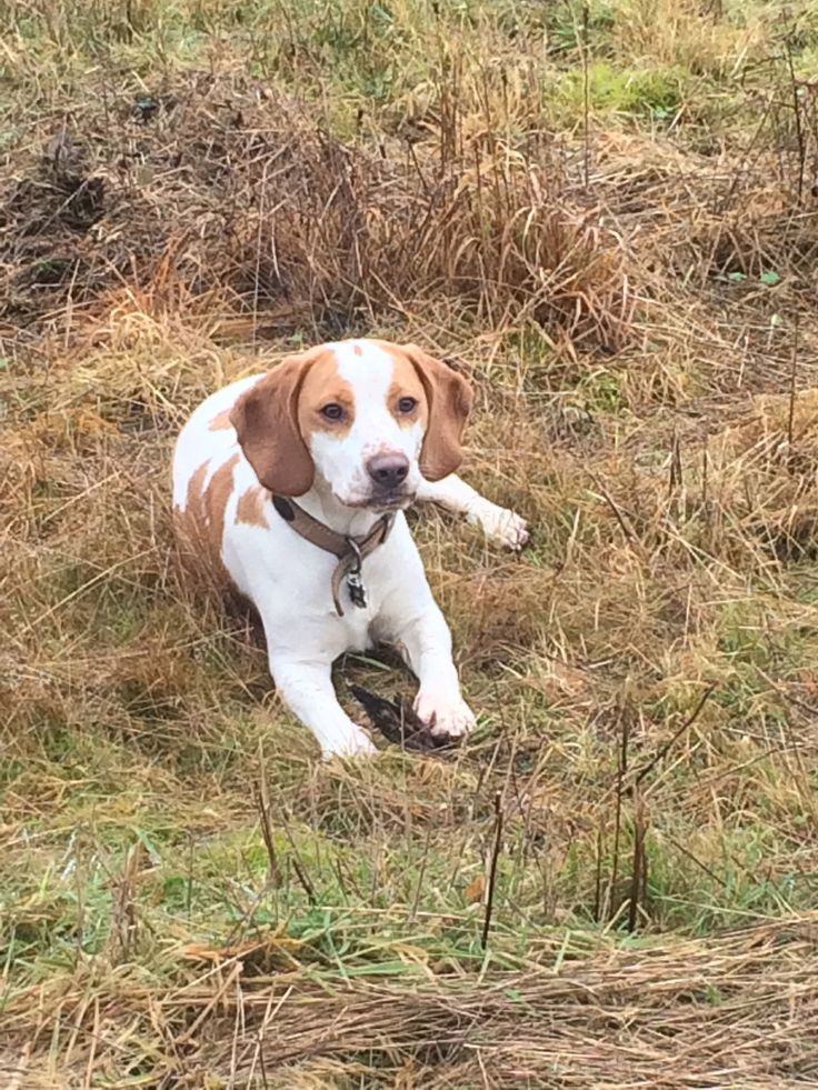This is one member of the Cavorting in the Country party - our very own Beagle. He is one of the reasons why we get out so much into the wilds of the countryside and get to see lots of beautiful things