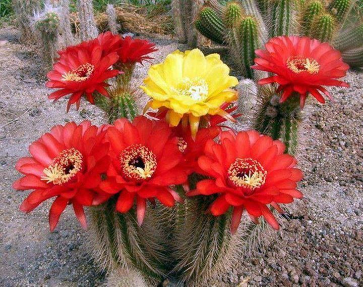 Statement Clutch - Red Cactus Flowers by VIDA VIDA CexFGe0