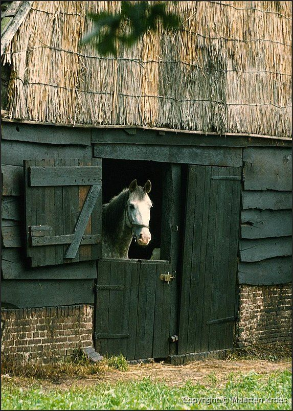 Stables & Horses | Thatch roof wood stable & horse at the door