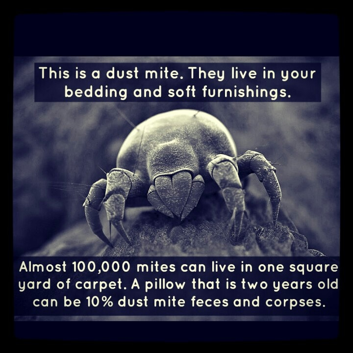 Felt like a weenie about being allergic to dust mites