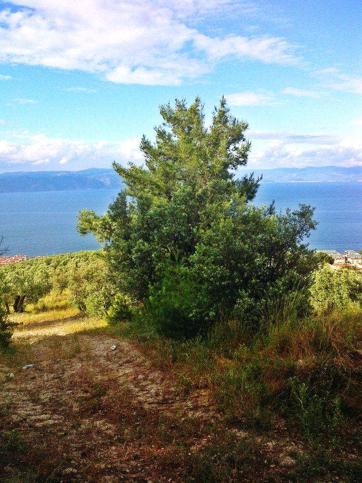 forest, sea, sky, mountain