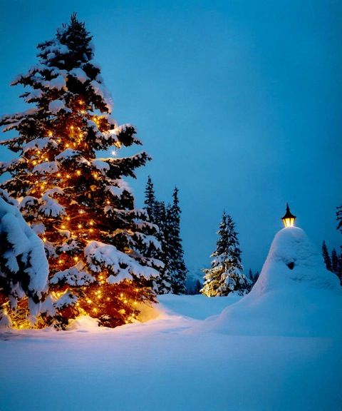 Christmas Tree in the snow, Lake Louise, Canada