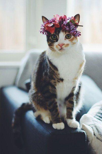 gatinha com coroa de flores