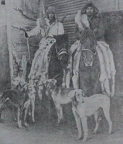 Казахские охотничьи собаки тазы.