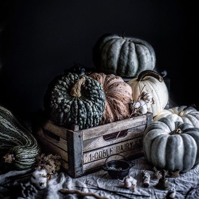 Oh hey. We're getting seasonal AF because it's decorative gourd season. Let's celebrate it with my favorite piece of writing from McSweeney's welcoming autumn and its nip in the air, corn fields, and mutant squash. Because it's not summer, it's not winter, and it's not spring. It's fall... Google decorative gourd season to give it a read. Because it's totally not an appropriate piece of writing to quote here. It's our fall tradition. What's yours?  #fallyall #itsdecorativegourdseason…