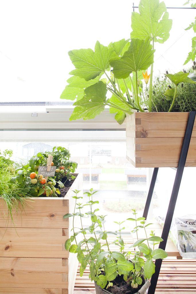 Ideas for balcony garden!