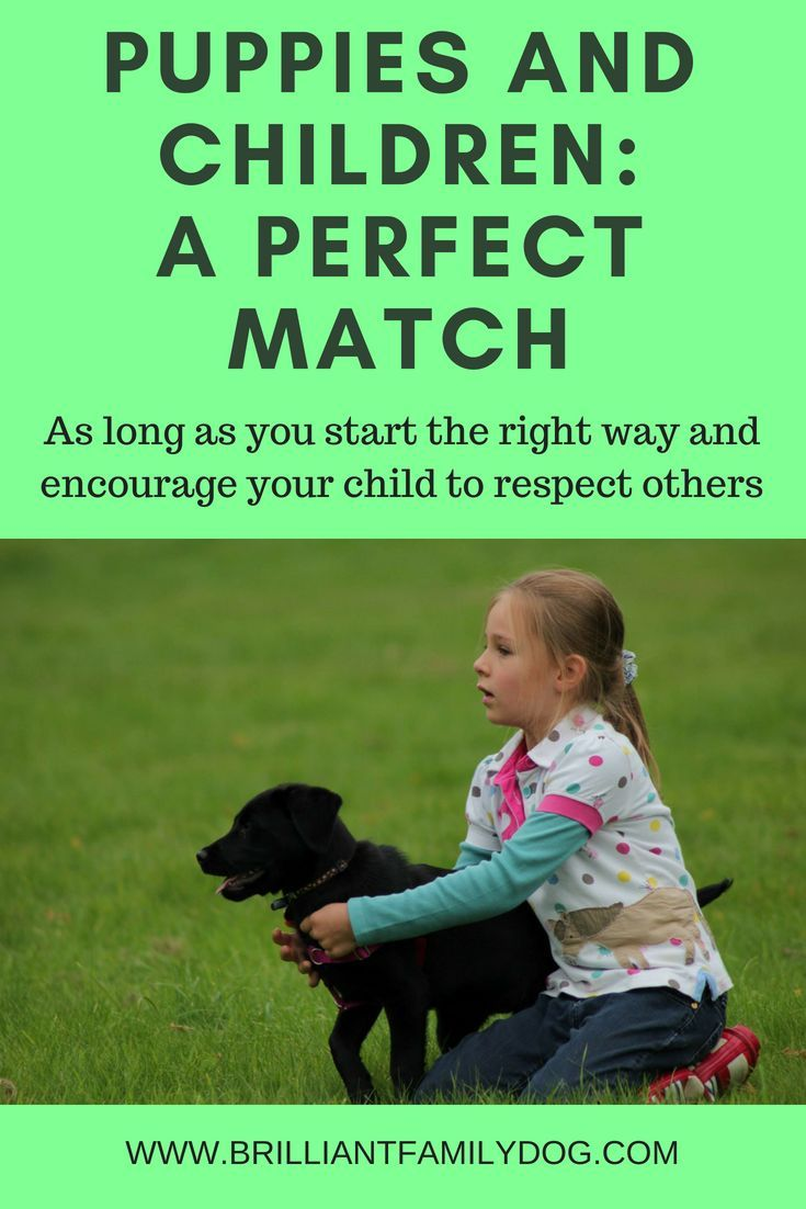 How Can Your Family Dog Teach Your Children Empathy Dog