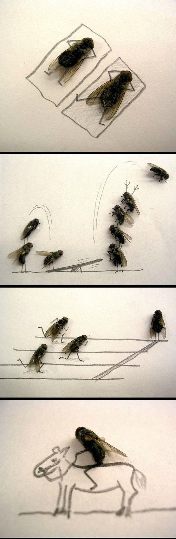 The guy who caught and drew the most awesome (and kinda strange) dead fly comic ever. | 25 People Who Laugh In The Face Of Boredom
