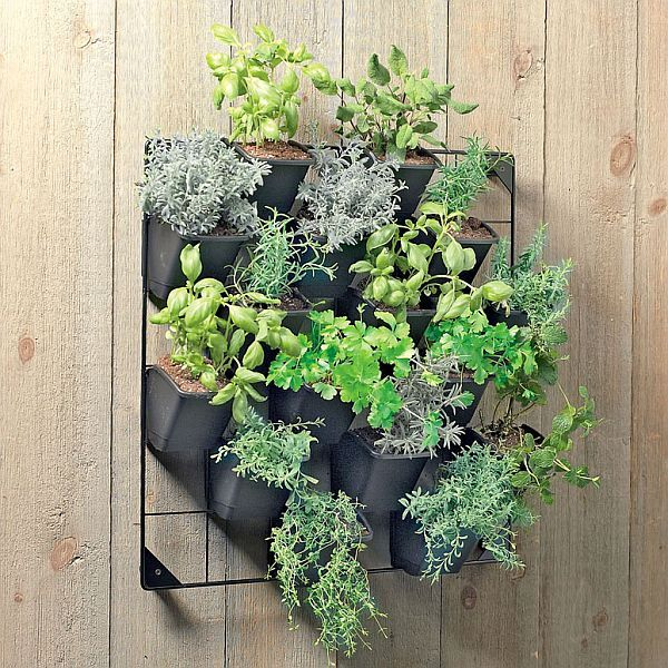 Vertical wall garden: nice to have this full of culinary herbs, just outside the kitchen door!